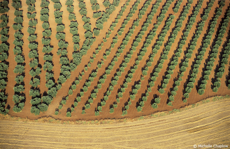 Looking down from a hot air balloon to the olive groves in Andalucia © M Chaplow