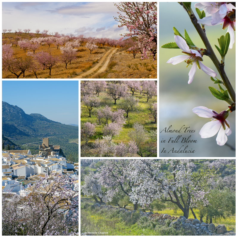 January & February are the best months to see Almond trees © Michelle Chaplow