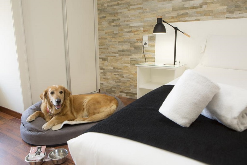 Dog enjoying the amenities © Booking.com / Casual Málaga del Mar