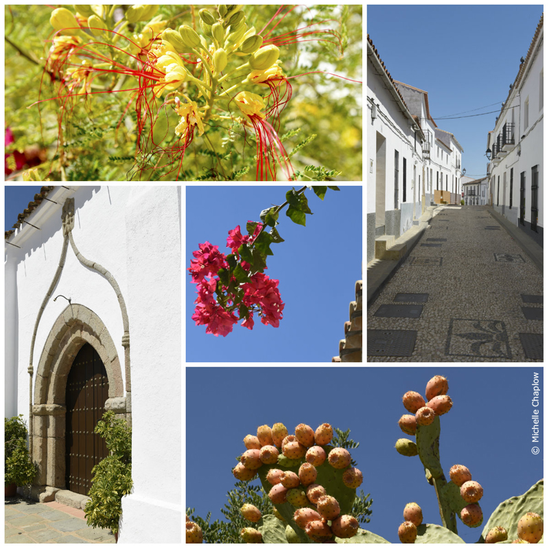 The cobbled streets and exotic plants of Hinojales © Michelle Chaplow