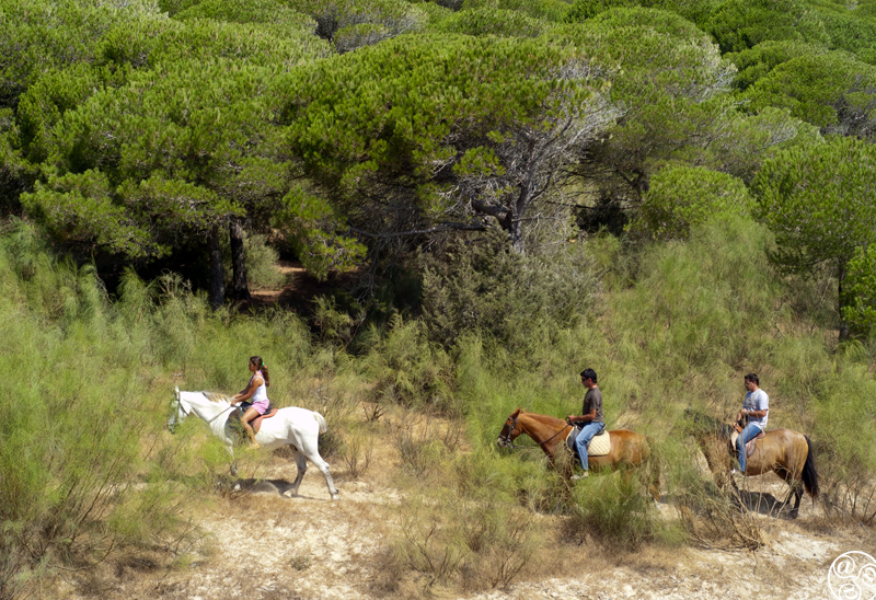 Horse ridding in Bolonia Andalucia  © Michelle Chaplow