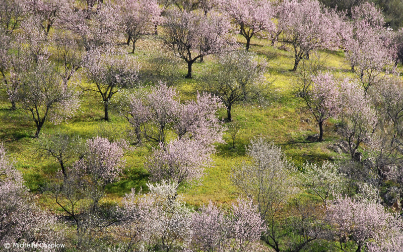 Spain is the second largest almond producer of Almonds in the world
