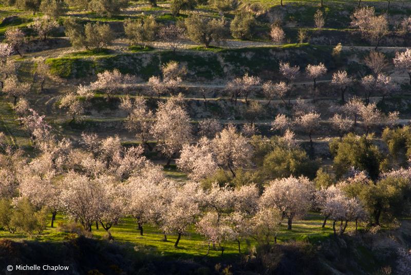 Springtime in Beas de Granada © Michelle Chaplow