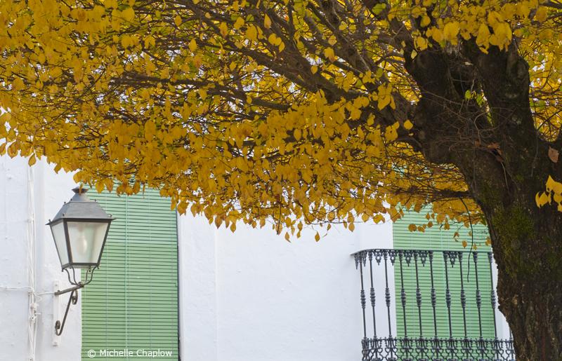 Castaño del Robledo © Michelle Chaplow