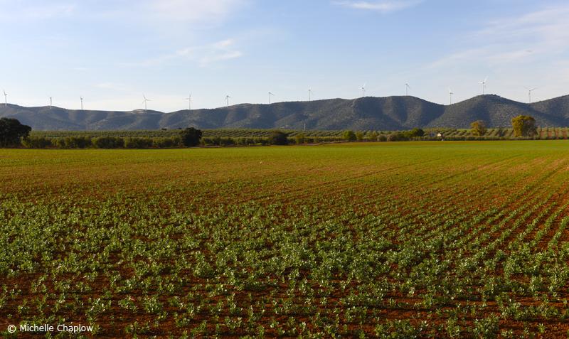 The fertile plains, near Fuente de la Piedra, Malaga. © Michelle Chaplow