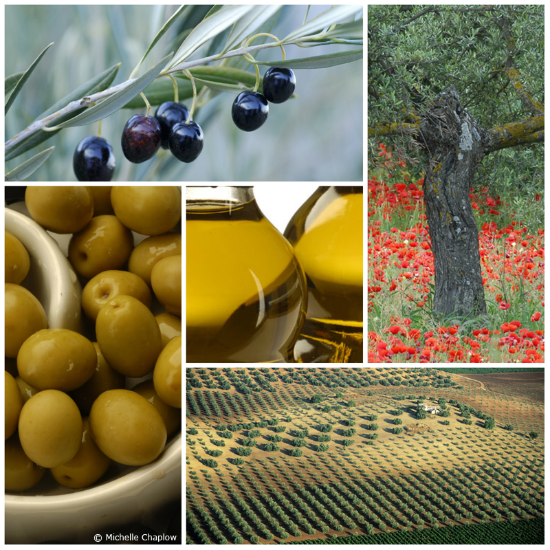 The olive and its oil © Michelle Chaplow