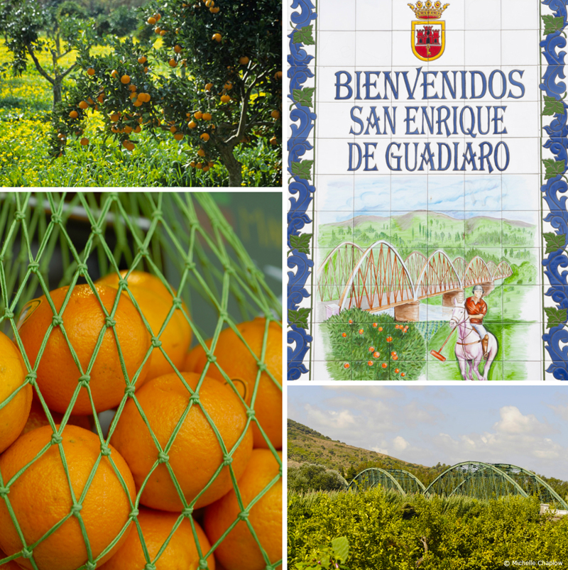 San Enrique de Guadiaio land of oranges and Polo fields © Michelle Chaplow