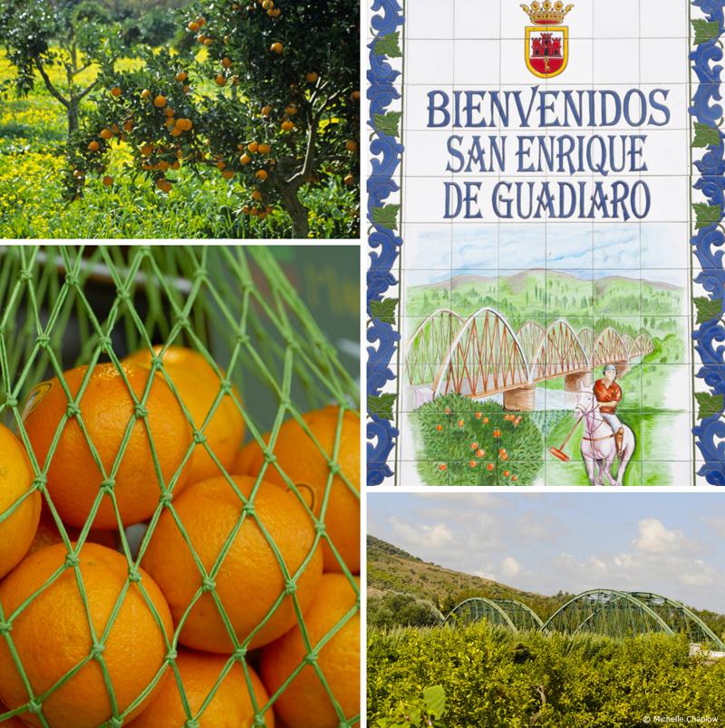 San Enrique de Guadiaio land of oranges and Polo fields © Michelle Chaplow