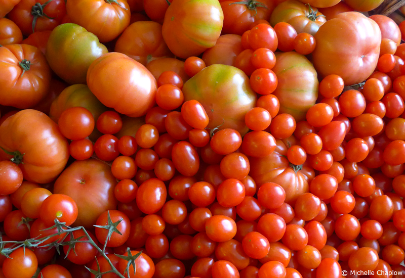 Tomatoes, home grown in Andalucia, Spain. © Michelle Chaplow