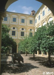 The tree-lined patio at Cordoba's Episcopal Palace