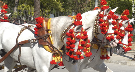 The may horse fair in Jerez © Michelle Chaplow