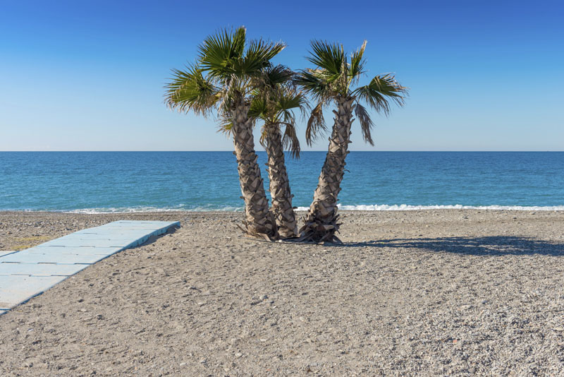 Palms - A Familiar Site on The Costa Tropical © iStock