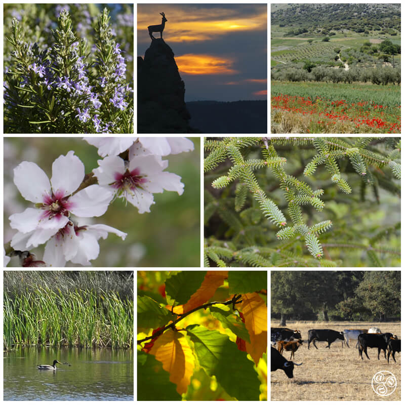 Flora and Fauna in Andalucia © Michelle Chaplow