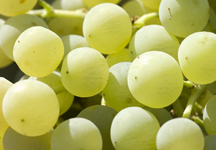 Grape harvest festivals take place in early September in Andalucia.