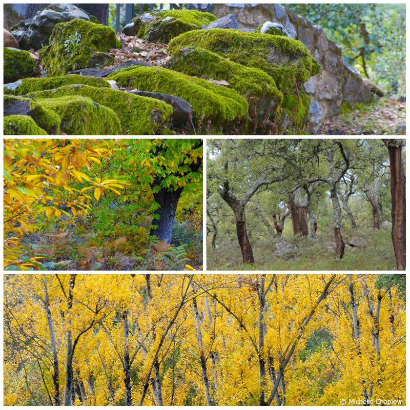 the trees in the Sierra de Aracena are spectacular in the autumn ©Michelle Chaplow