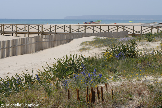 Flora and fauna on the Cadiz Coast.  © Michelle Chaplow .