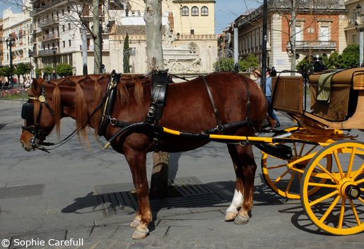 Go back in time and tour the city by horse and carriage.© Sophie Carefull