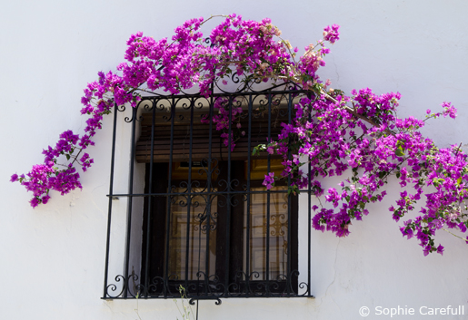 Whitewashed walls and bougainvillea in Benamahoma. © Sophie Carefull