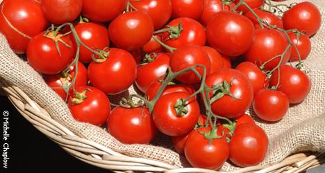 © Michelle Chaplow Grow your very own organic vegeatbles