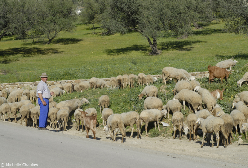 Every day rural life in the village of Alcucin. ©Michelle Chaplow