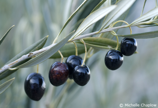 Jaén is the olive capital of Andalucia. © Michelle Chaplow