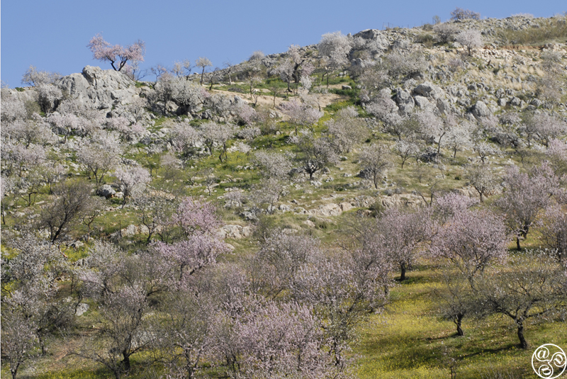The Sierras Subbéticas is a stunningly beautiful, rugged park located in the heart of Andalucia ©Michelle Chaplow