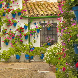 Every spring Córdoba bursts into bloom with the Patios Competition. This year it takes place from the 6th to 19th May 2019.
