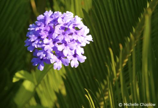 Mediterranean flowers flourish in Malaga.© Michelle Chaplow