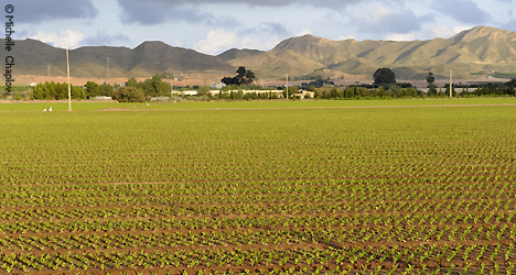 © Michelle Chaplow Agricultura en Pulpí