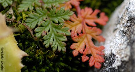 © Michelle Chaplow Flora in the Sierra de las Nieves.