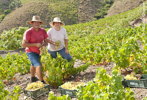 Ruta del Sol y del Vino, the route of Sun and Wine © Michelle Chaplow .