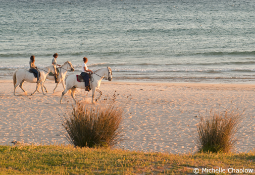 Horseriding on the beach at sunset. © Michelle Chaplow