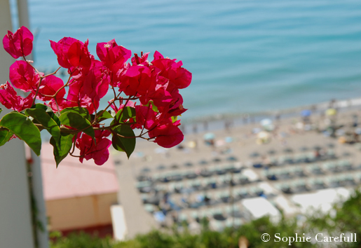 Beautiful bougainvillea in Torremolinos. © Sophie Carefull