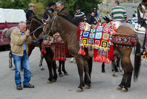 Horses and donkeys don bright colours for Fiesta de San Anton. © Sophie Carefull