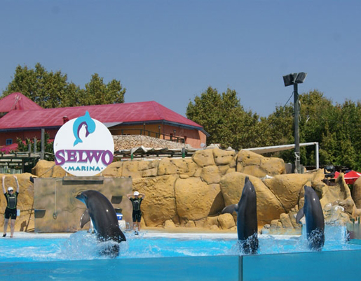 Dolphin shows at Selwo Marina. ©Selwo Marina