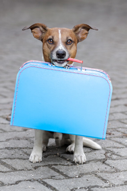 Pet insurance in Andalucia. © istock