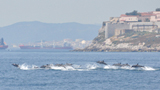 Dolphin Watching Excursion Gibraltar