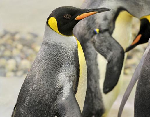 Penguins on Ice Island at Selwo Marina. ©Selwo Marina