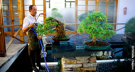 © Michelle Chaplow Watering the trees at the Bonsai Museum.