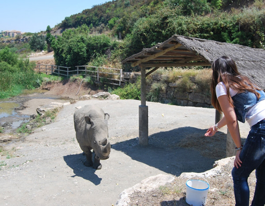 Feed the rhinos on a VIP visit to Selwo Aventura. © Selwo Aventura
