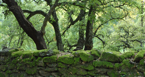 Stone walls with velvety green moss © Michelle Chaplow