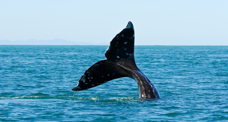 Have a whale of a time in Tarifa © iStock