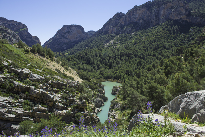 El Chorro a stunningly beautiful turquoise river bordered by pine forests © Michelle Chaplow