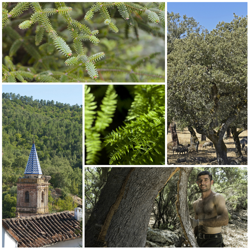 Spanish Forests Andalucia  © Michelle Chaplow