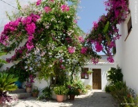 Bougainvillea in the beautiful town of Salobreña © Sophie Carefull